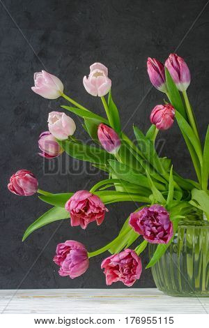 Tulips In A Vase With Water. Pink And Burgundy