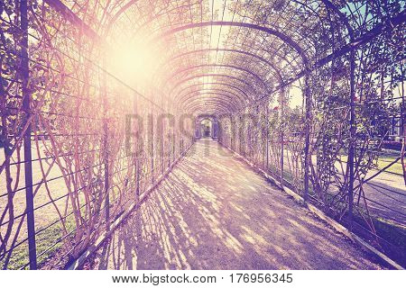 Color toned garden pergola tunnel with path against the sun.