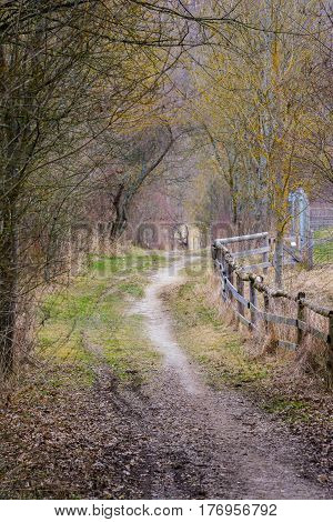 Dirt Path In Forest Woods Daytime Walk Strolling Wild Nature Landscape Wooden Fence