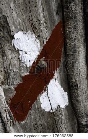 Snail climbs slowly through the bark of a tree