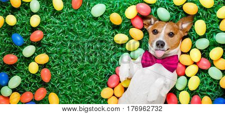 Easter Bunny Dog With Eggs