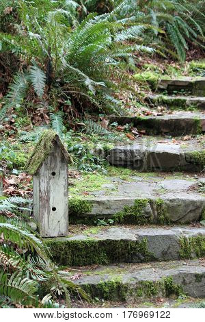 Mossy Stone Steps with a Birdhouse in the Garden