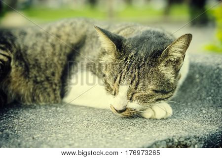 abstract vintage filter on sleeping cat on cement floor - can use to display or montage on product