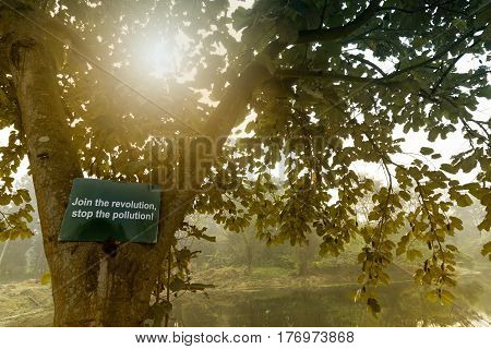 Tree with sun rays from behind with a hoarding requesting all to join the revolution and to stop the pollution. Beautiful winter morning scene of Kolkata