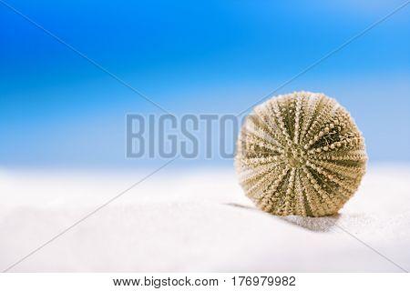 urchin shell starfish with ocean, on white sand beach