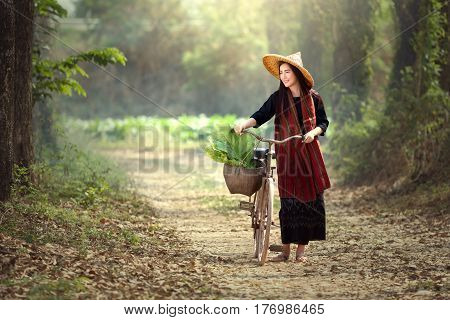 Beautiful Lao women riding bicycles. Lao traditional beautiful woman walking in the tobacco garden.