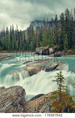 Creek in Yoho National Park in Canada