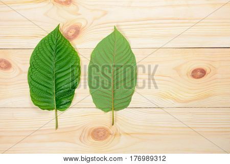 Mitragyna speciosa or Kratom leaves on wood background