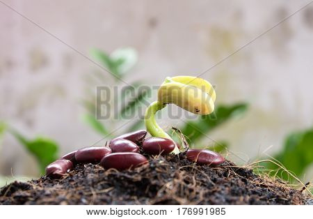 Green sprout growing from seed in organic soil, Agriculture and Seeding Plant seed growing step concept, sunset growing