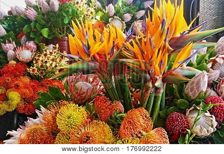Strelitzias, Pincushions and Protea flowers in the Funcal Market on Madeira Island