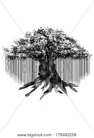 Black silhouette of old banyan tree isolated on white background.