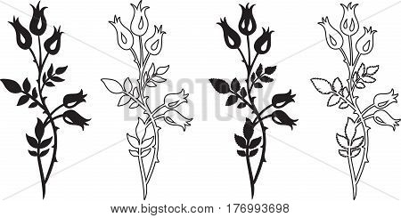 Drawing of a dog rose - two variants with different leaves a black silhouette and line art