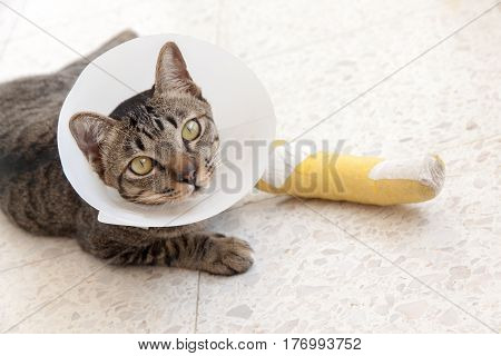 cat wearing an Elizabethan collar and Cat leg splint sleeping on the floor.