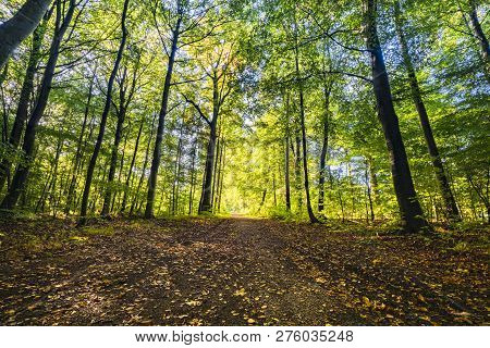 Springtime In The Forest With Fresh Green Trees And Golden Leaves On The Ground From The Fall