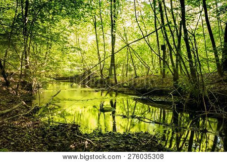 River With Green Color Reflecting From The Trees In The Spring