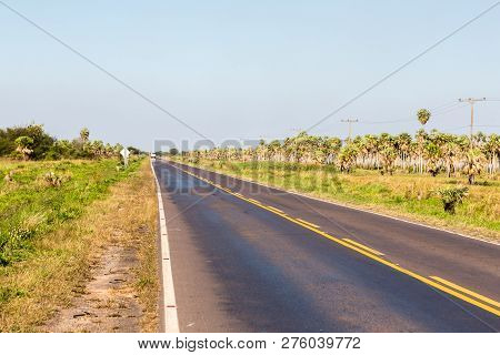 National Route 9 Highway Runs Through A Palm Forest And Grasses Of Paraguayan Chaco Savannah, Paragu