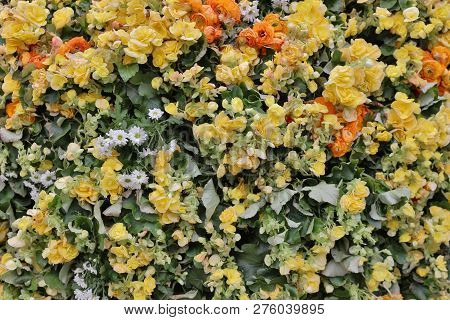 A Flower Beds In Formal Of Garden