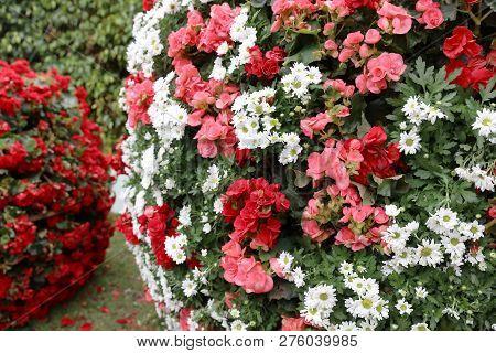 The Flower Beds In Formal Of Garden