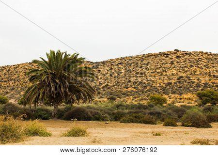 Mediterranean Desert Palm Plants Mediterranean Mountain Cactus
