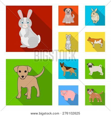Vector Design Of Animal And Habitat Sign. Collection Of Animal And Farm Vector Icon For Stock.