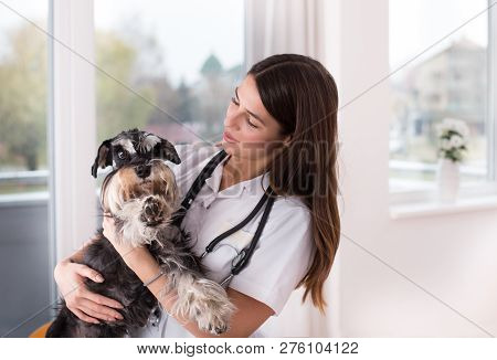 Female Doctor Veterinarian Holding Afraid Cute Dog At Clinic