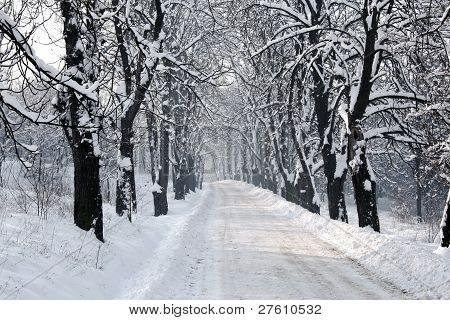 Winter tree snow hall