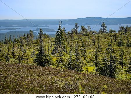 Summer Landscape With Spruce Trees In The Wilderness Of Riisitunturi National Park, A Mountain In La