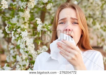 Outdoor Shot Of Discontent Young Girl Has Seasonal Allergy, Uses Tissue, Poses Over Blooming Tree, H