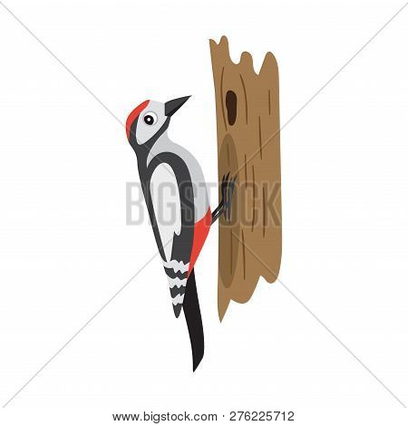 Colorful Forest Bird, Woodpecker Sitting On Tree, Isolated