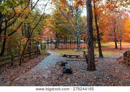 Amicalola State Park In Autumn
