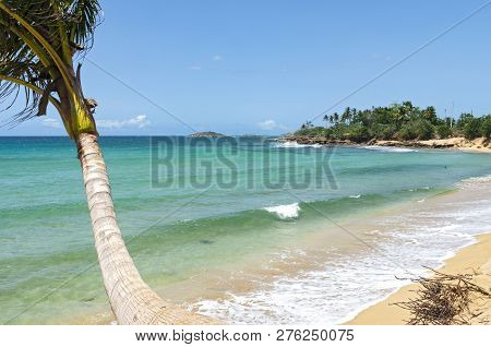 Atlantic Coast With Palm Trees Tides And Rocky Shoreline Outside Arecibo Puerto Rico