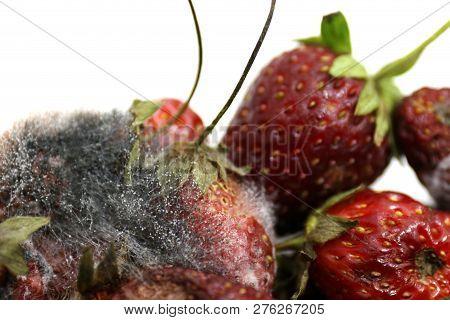 Strawberry rot, Rotten fruit, fruit moldy, Rotten fruit, Fruit Strawberry rot and mold close up poster