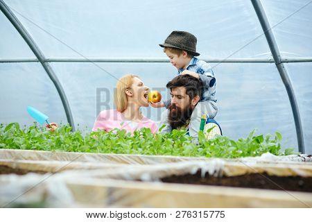 Healthy Food. Healthy Food Concept. Happy Family Growing Healthy Food. Healthy Food For Lovely Mothe