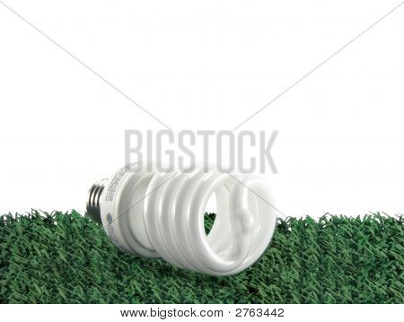 Cf Bulb On Grass Isolated