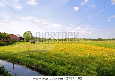 Typical dutch landscape in summertime in the Netherlands