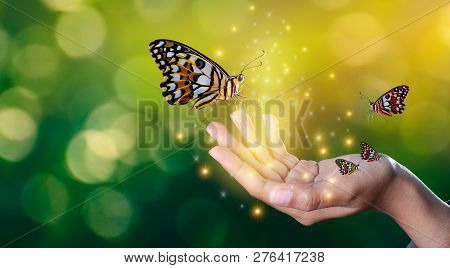 Butterflies Are In The Hands Of Girls With Glittering Lights Sweet Encounter Between A Human Hand Bu