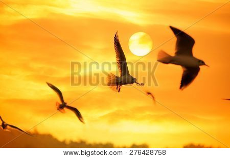 Sunset sky of light with seagulls in the air