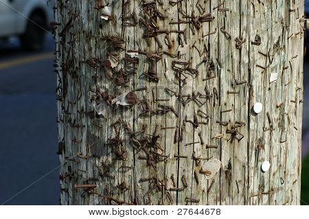 Pole with years of staples