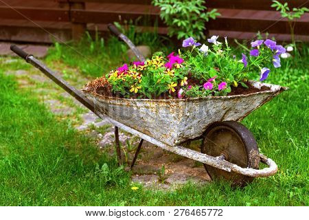 Old Rusty Wheelbarrow Flowerbed Colorfull Flowers Garden Decor