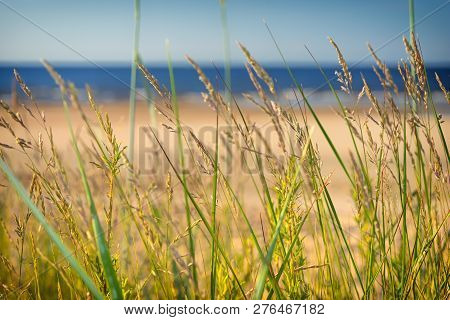 Dune Grass Blurred Sand Beach Baltic Sea