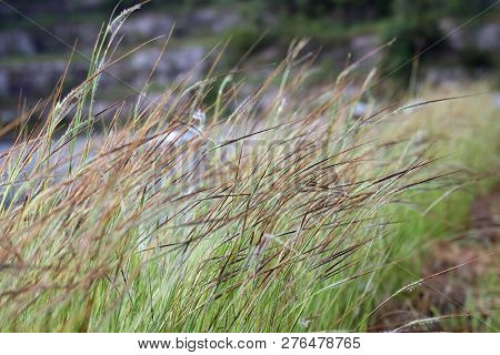 Grass, Flower Grass Field Background Morning Grass Wind Blew Gently Touched Meadow Close Up Scene, D