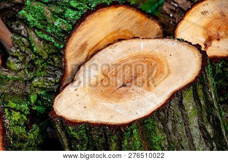 Stack of sawn logs. Woodpile of freshly harvested pine logs on a forest. Trunks of trees cut and stacked. Wooden mossy log poster