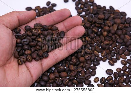Coffee Beans In Hand, Coffee Bean Background Texture With Copy Space For Text. Royalty High-quality