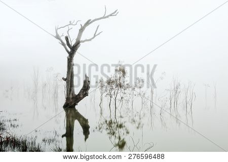 Trees In A Lake Of Fog, The Thick White Fog Obscuring Most Of The Colour And Giving  A Soft Dreamy A