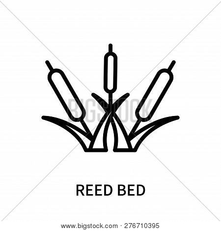 Reed Bed Icon Isolated On White Background. Reed Bed Icon Simple Sign. Reed Bed Icon Trendy And Mode