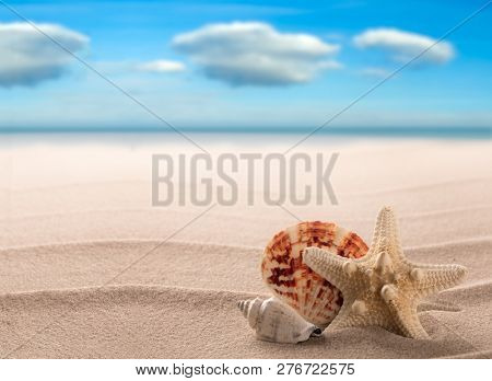 Sea shells and starfish on a white beach of a tropical paradise island. Star fish summer vacation or holiday background with copy space.