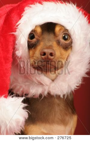 Puppy With Santa Hat On Its Head