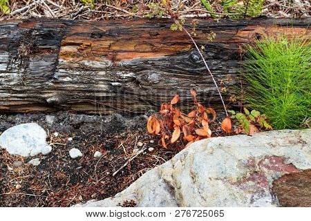 Log With A Rock And Grassy Leaves On Dirt