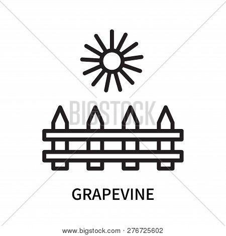 Grapevine Icon Isolated On White Background. Grapevine Icon Simple Sign. Grapevine Icon Trendy And M
