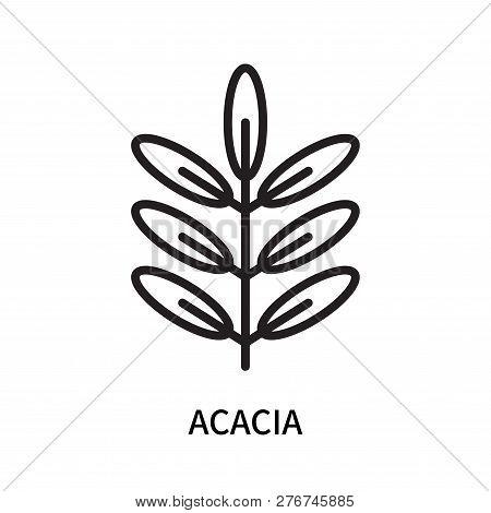 Acacia Icon Isolated On White Background. Acacia Icon Simple Sign. Acacia Icon Trendy And Modern Sym